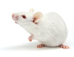 実験小動物用 高性能コンパクトM...